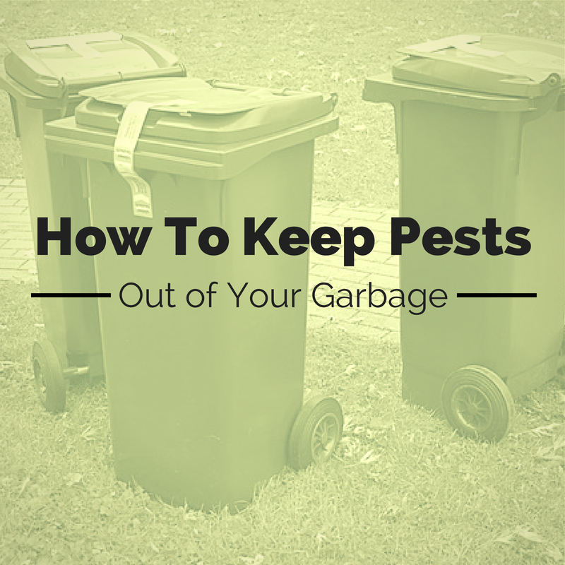 Keeping Pests Out of Garbage
